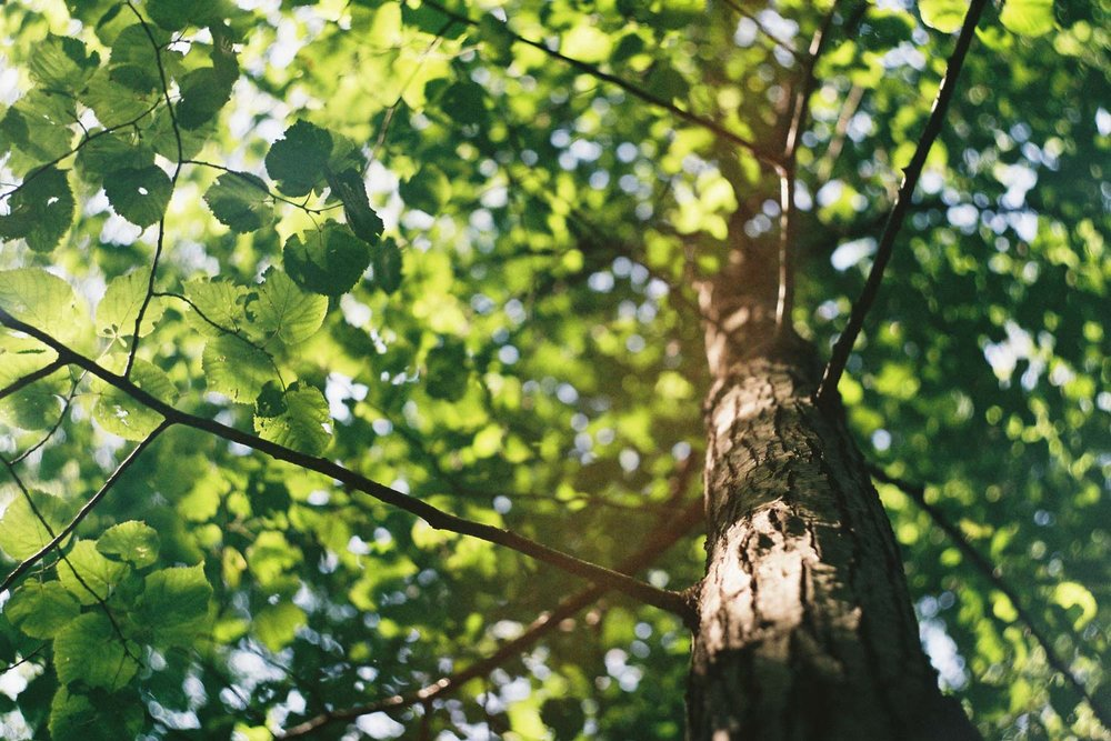 A professional company with 35 years experience dedicated to excellence in tree care and customer service. - We offer a comprehensive range of services providing advice, professional tree care and tree management options.