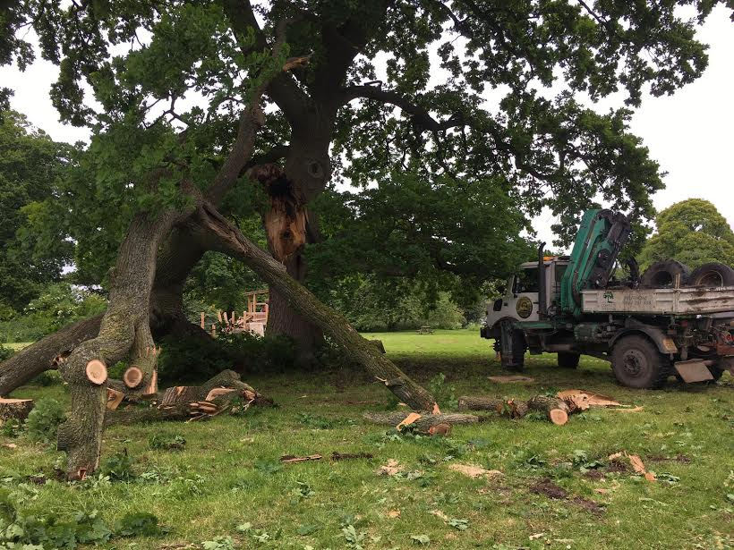 Large limb failure at Waterperry Gardens.