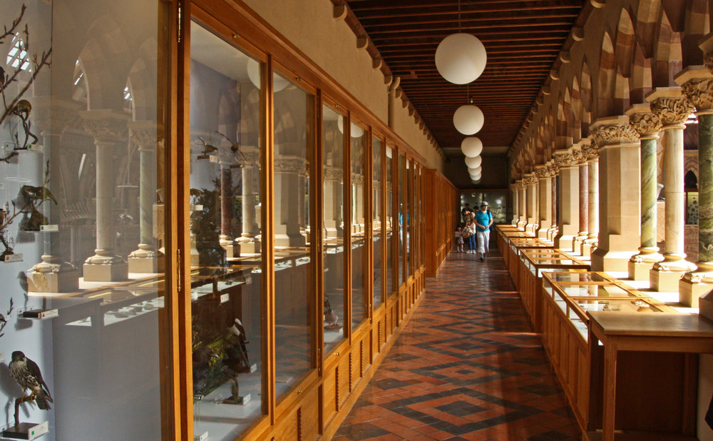 The first floor gallery of the Oxford Museum of Natural History