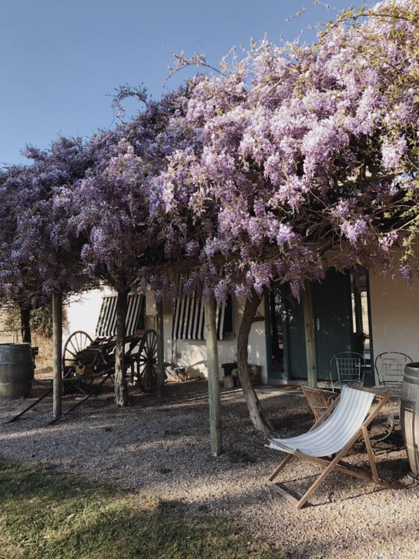 Wonderful wisteria