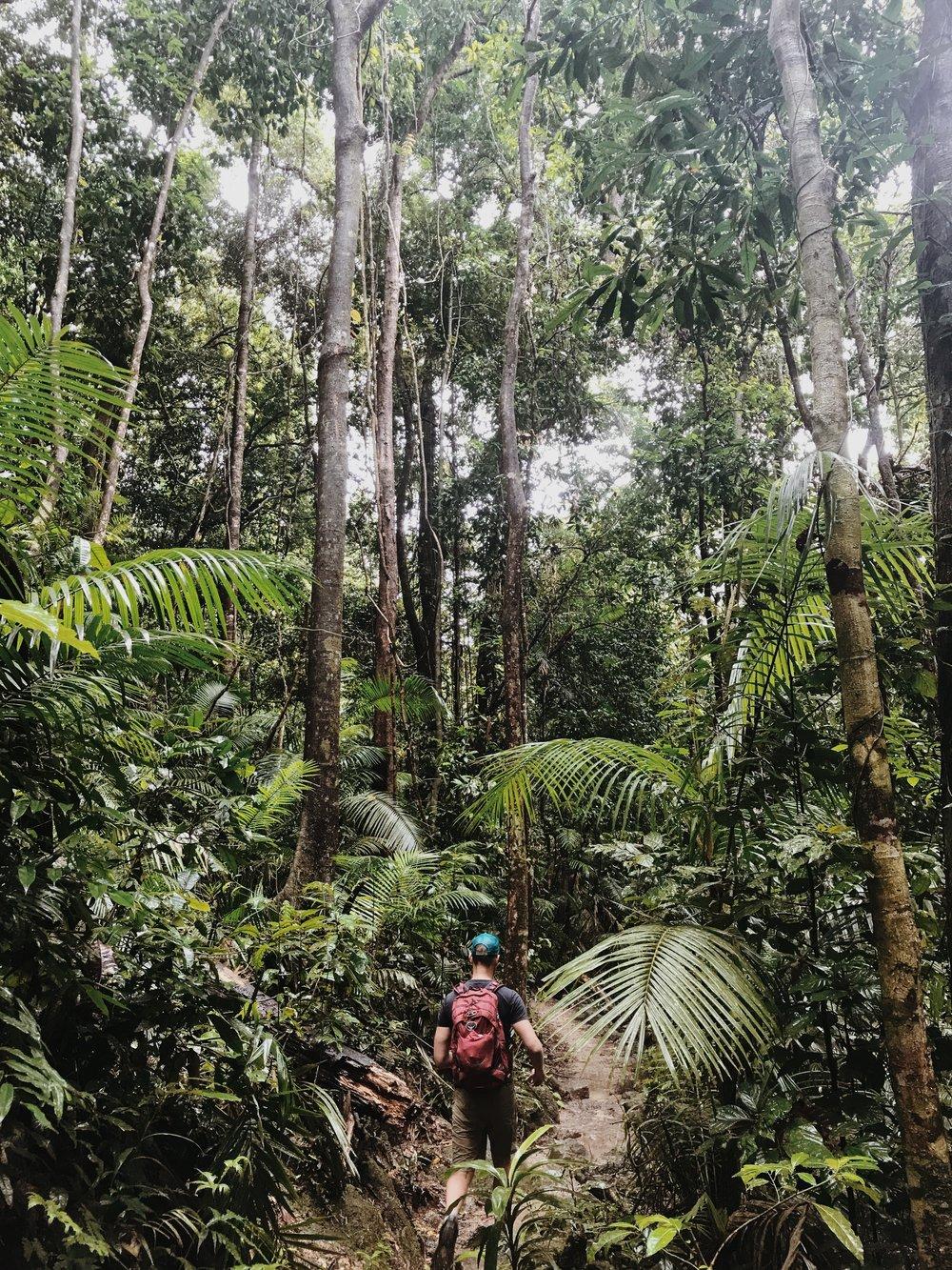 The dense jungle canopies of Mossman Gorge