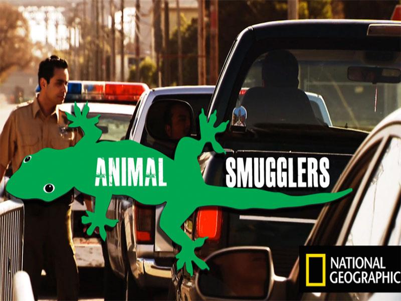 NewGaller_animalsmugglers1.jpg