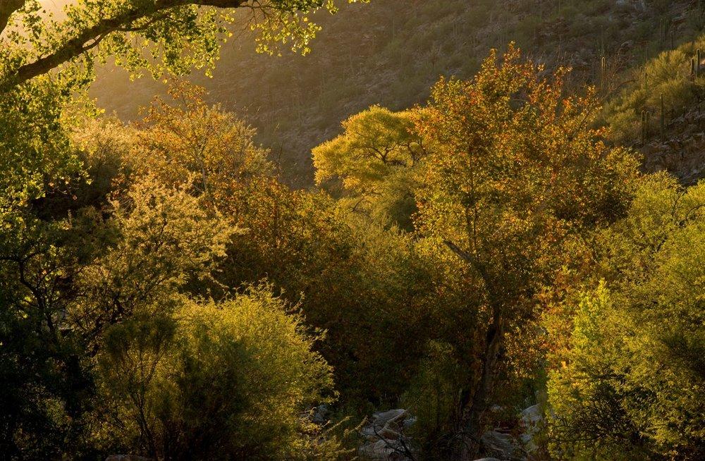 sabino-canyon-fall-11-15-091.jpg