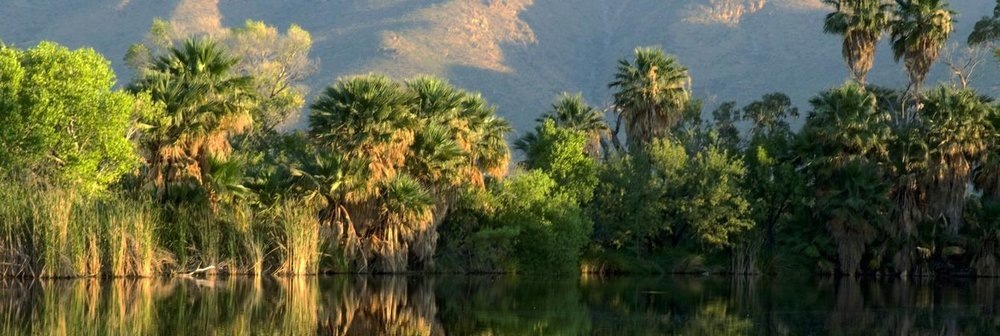 catalina-reflected-agua-caliente-park.jpg.1340x450_0_40_6978.jpg