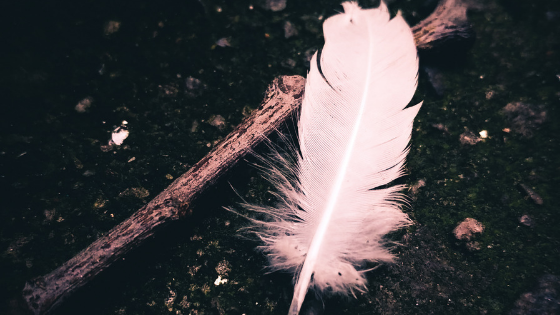 White feather.png