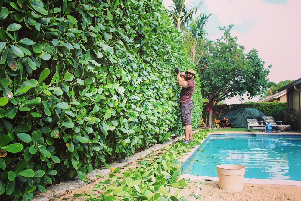 Hedge Trimming - ICON Landscape Solutions provides hedge trimming service to residential and commercial customers.You don't want to be the eyesore of the neighborhood so let us help when it's time.