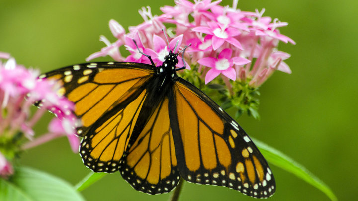 how to south florida butterfly garden - Florida Butterfly Garden