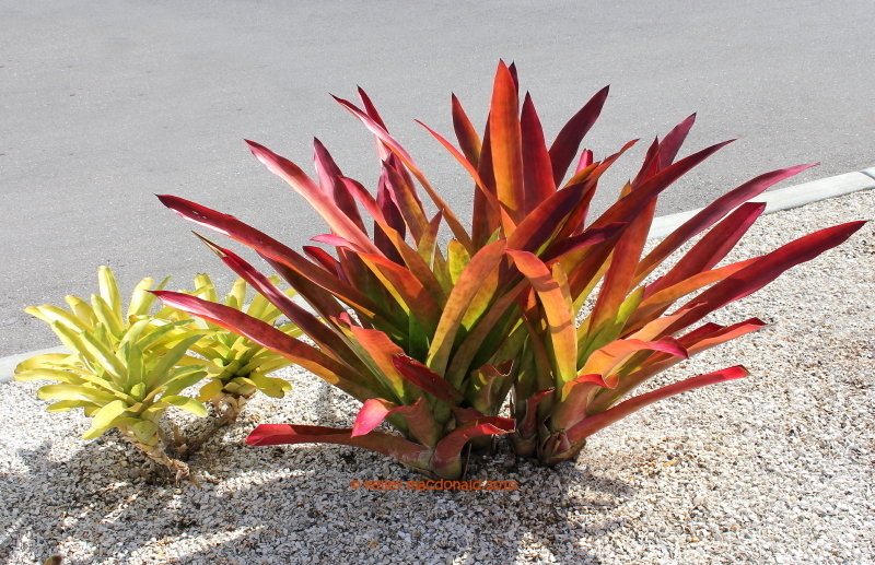 Plant Guide 1.jpg