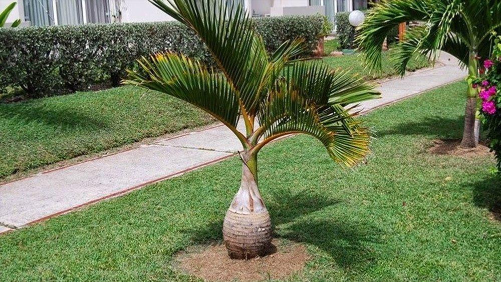 Plant Guide 2.jpg