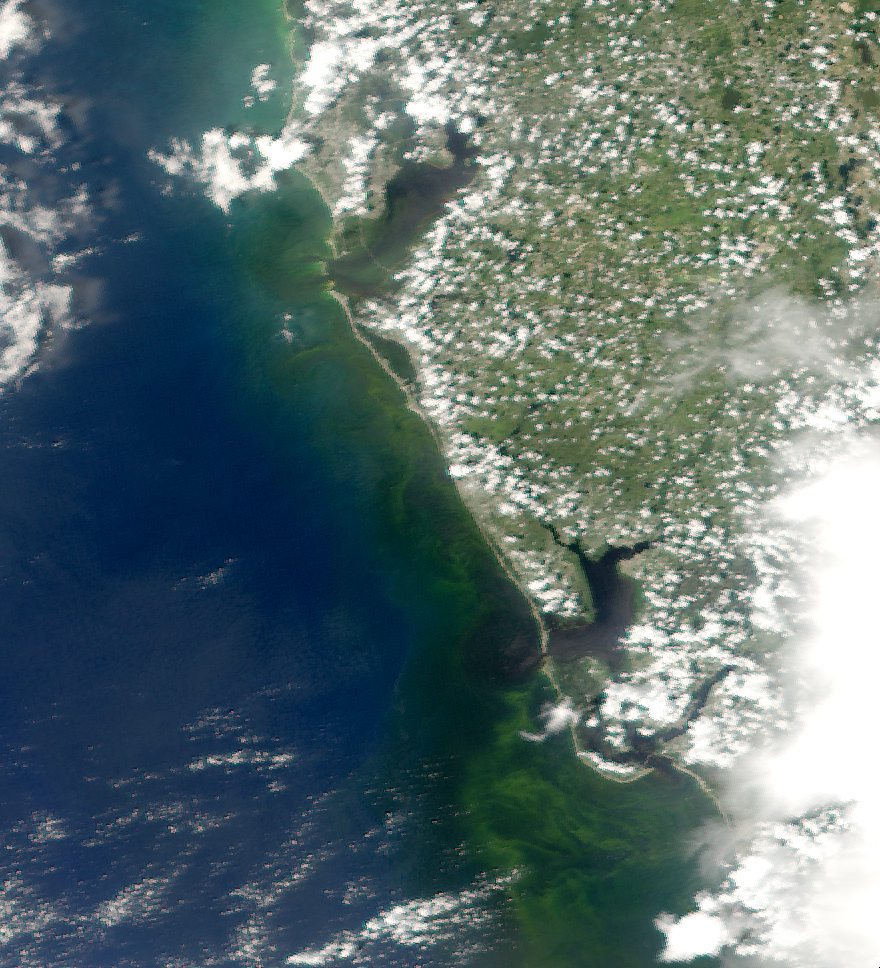 The Red Tide appears as a light green swirl off the coast of Florida from this August 18th MODIS satellite image. Photo courtesy of the Optical Oceanography Lab at the University of South Florida College of Marine Science