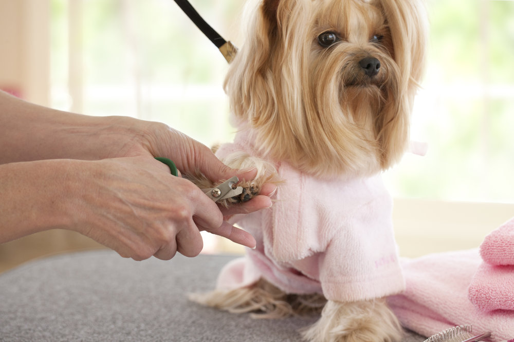 Nail Trimming - $15 -For additional household pet.