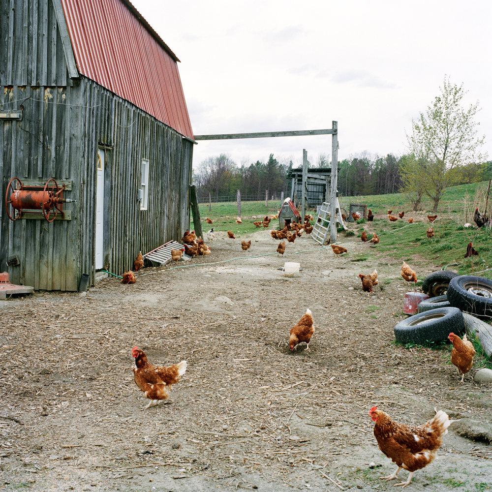 04_chickens.jpg
