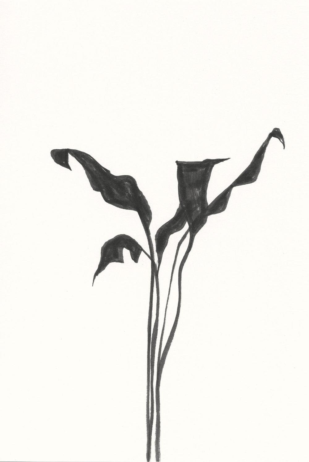 Plant #16