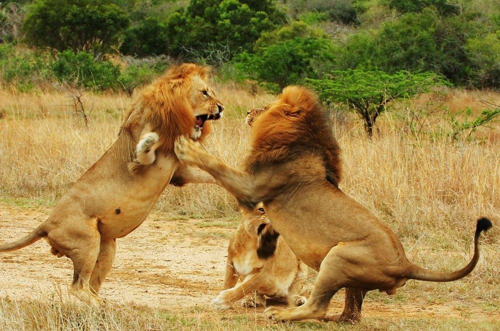 Tanzania selous 5.jpg