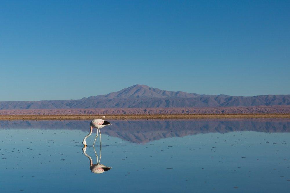 Chile Atacama 11.jpg