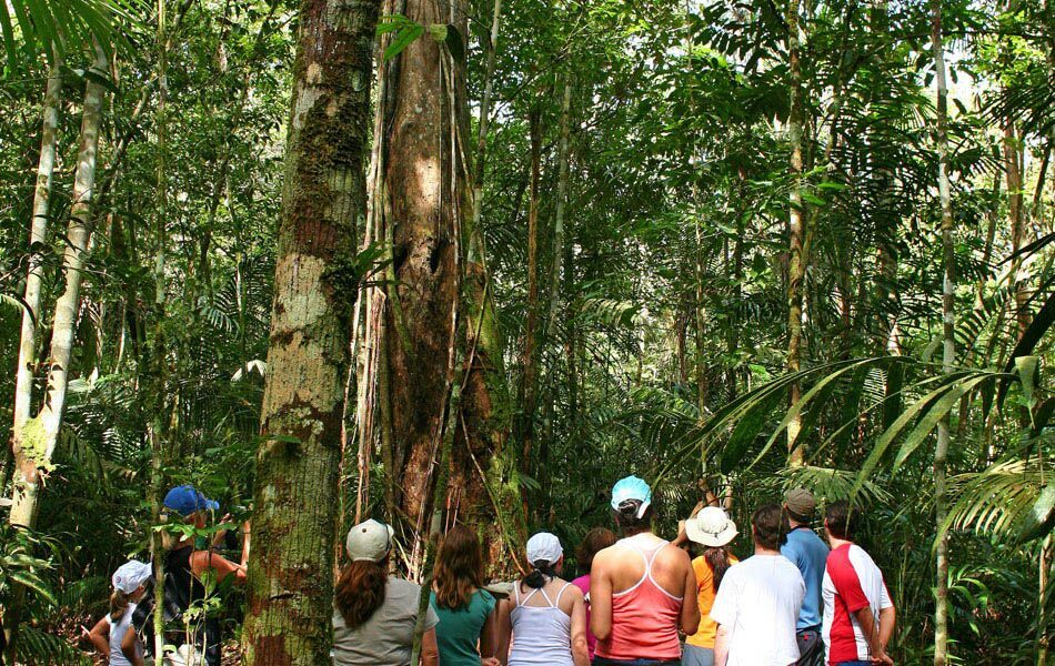 Brazil Amazonas Tour 3.jpg