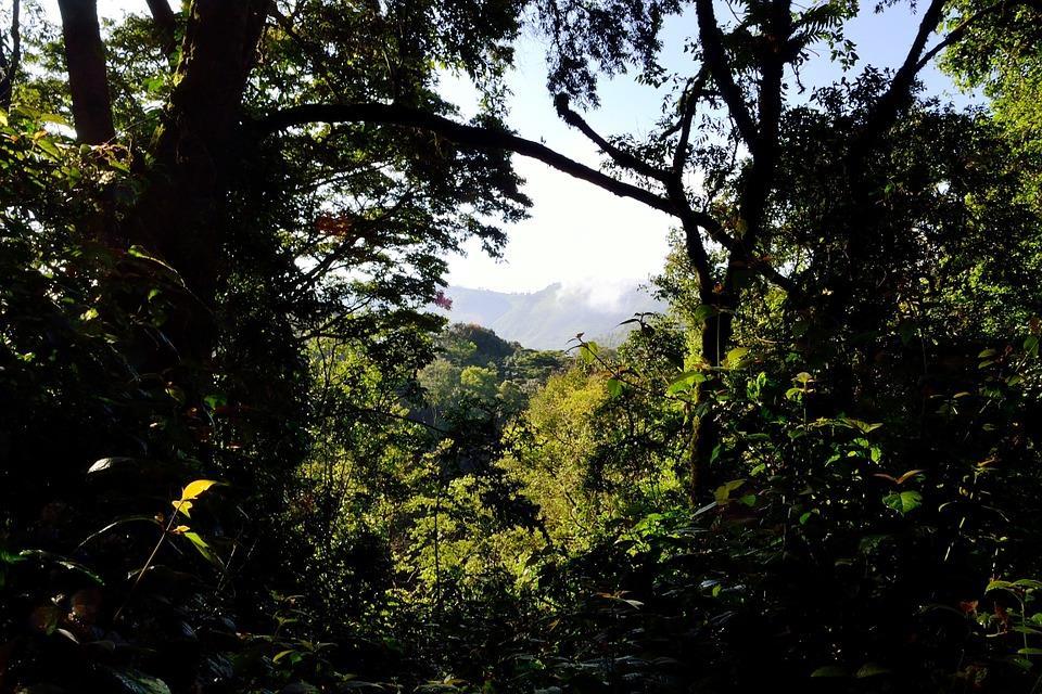 Uganda forest.jpg