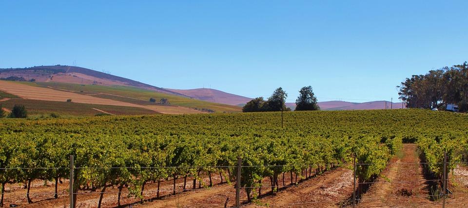 South Africa wine.jpg