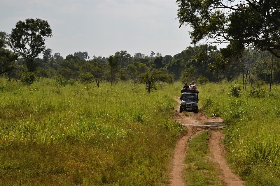 Dra på safari