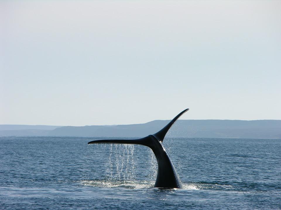 Falklandsøyene
