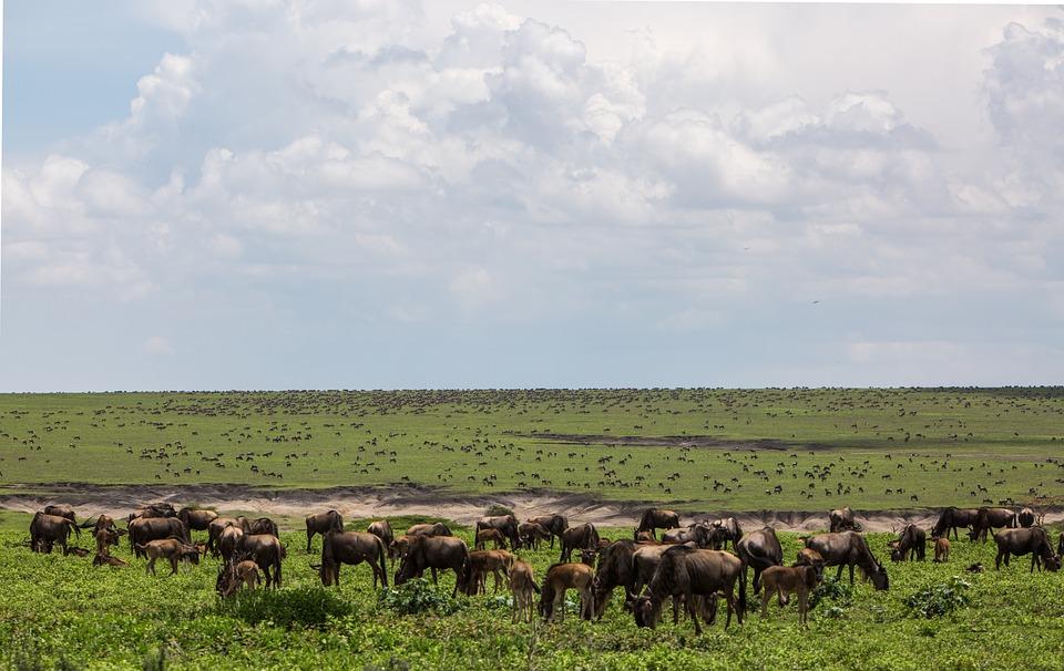 Ngorongoro krateret