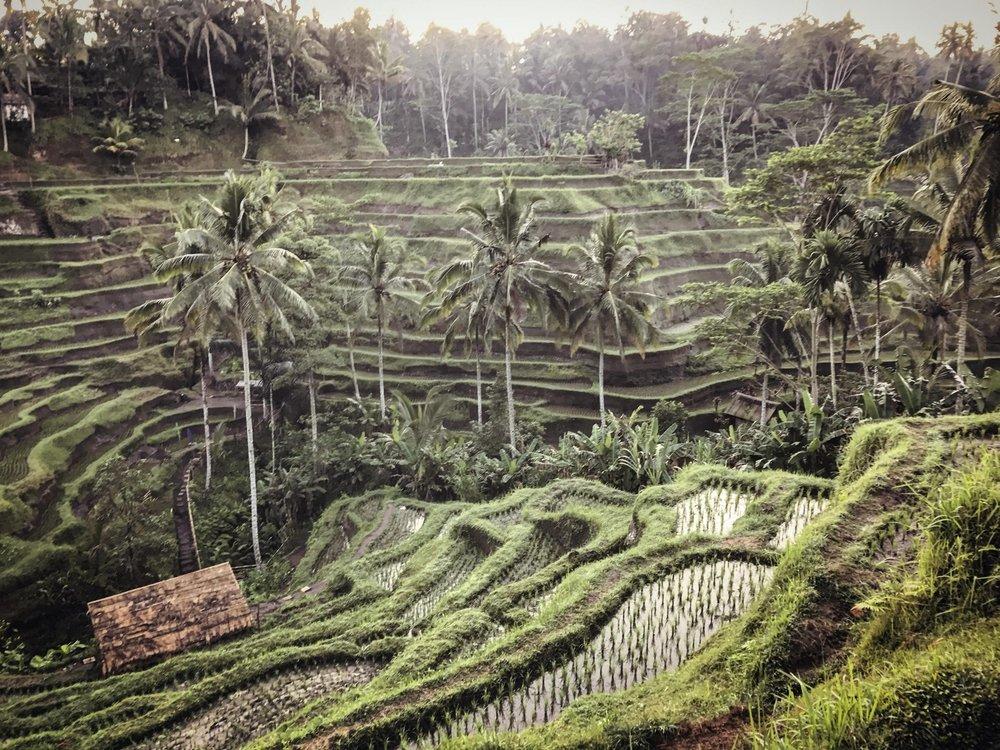 Sentrale Bali