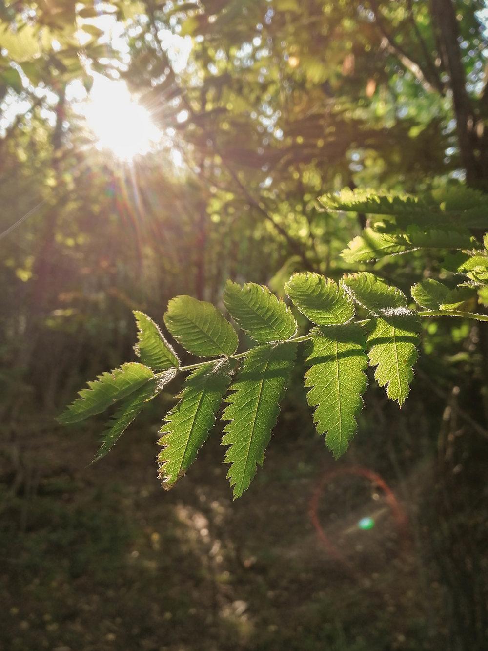 morning_light.jpg