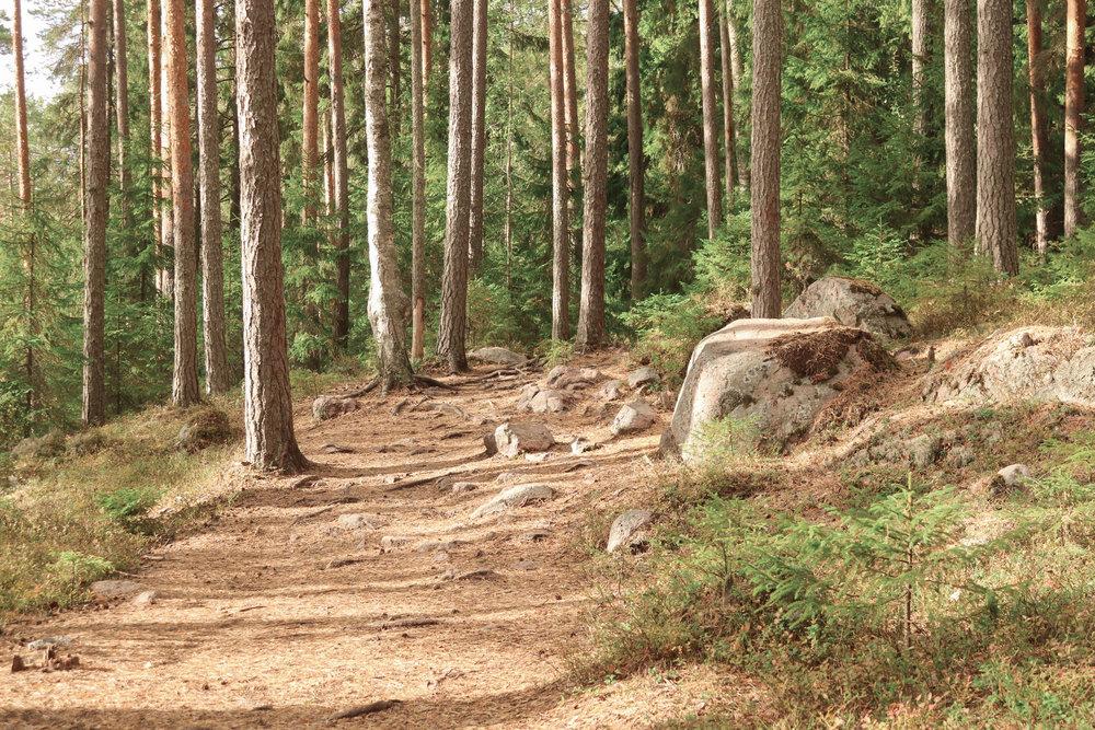 repoveden_kansallispuisto_2.jpg