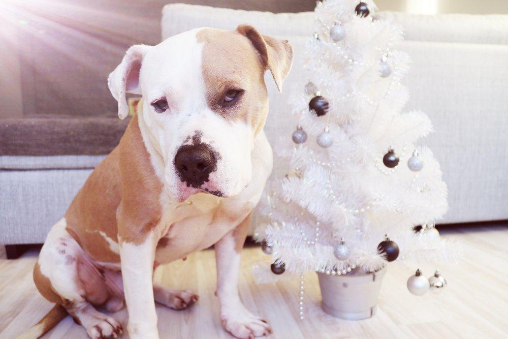 christmas_dog.jpg