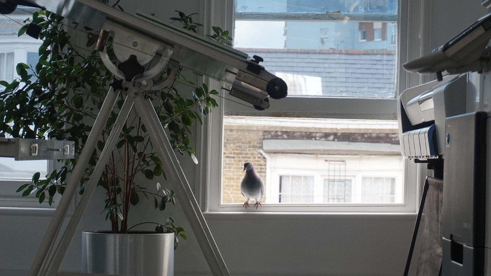Studio_WEB_Pigeon.jpg