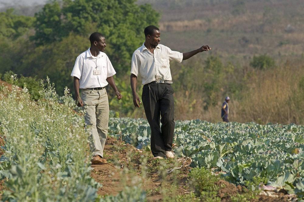 oportunidade-mozambique.jpg