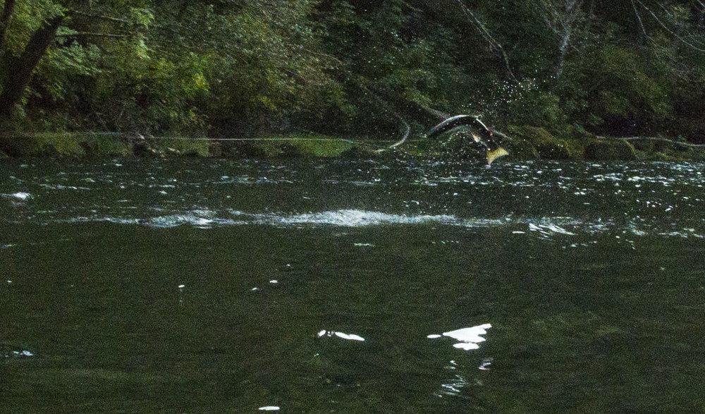 Last fall's birthday fish.