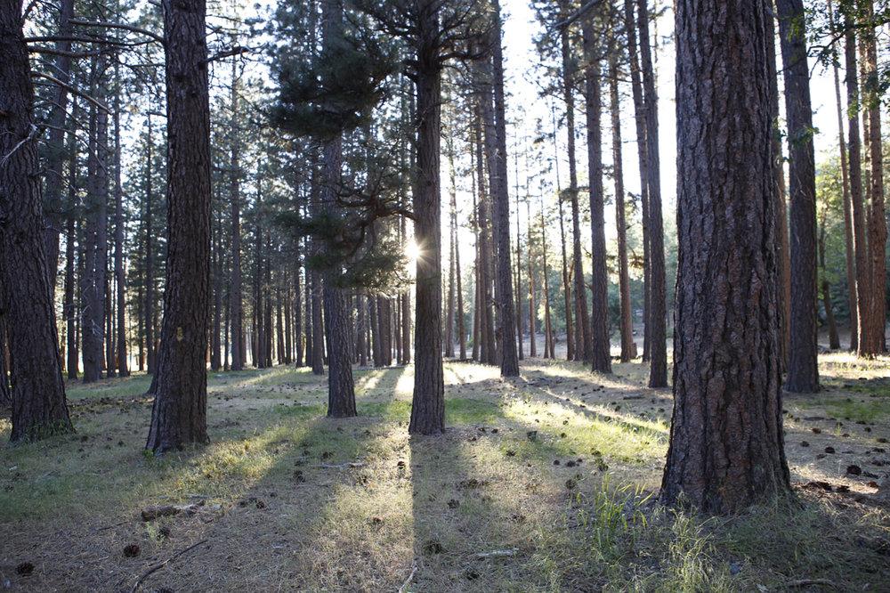 _MG_3585_woods.jpg