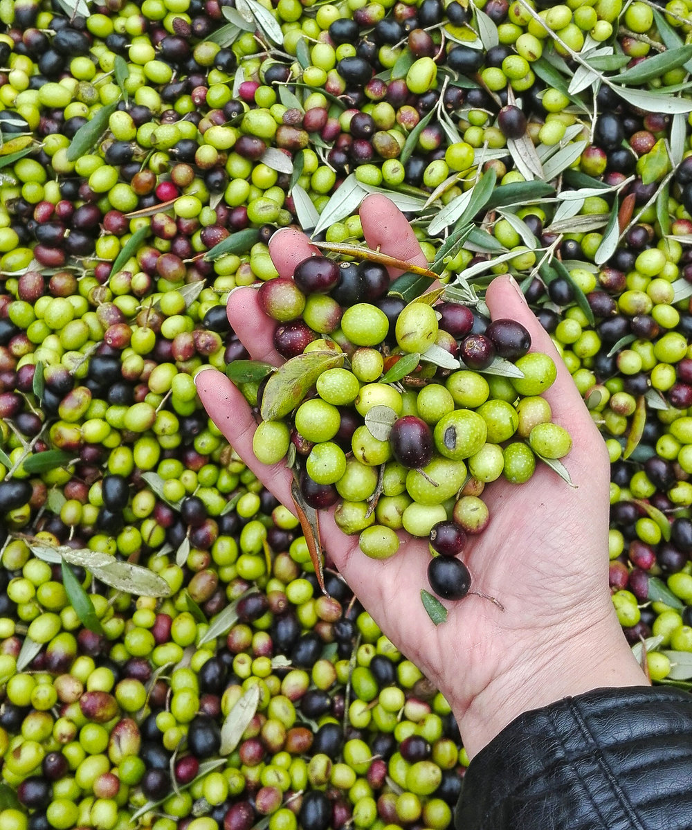 extra-virgin-olive-oil-florence.jpg