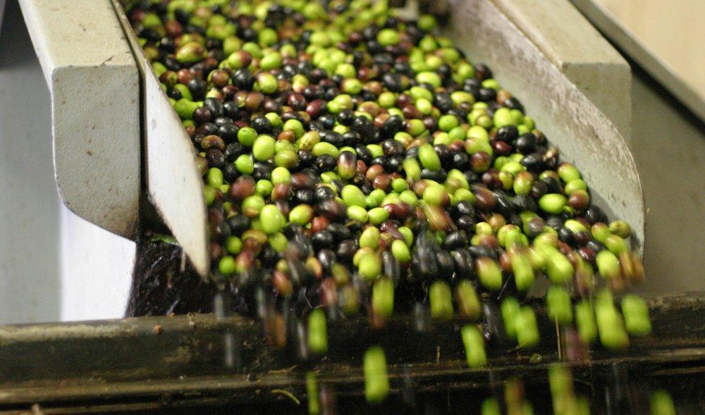 olives-italy-flickr.jpg