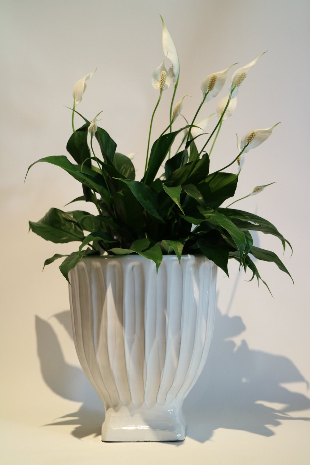 White Fluted Pots