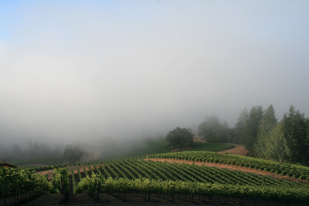 a Unique Climate   Vineyards are from 850-2,500 feet in elevation
