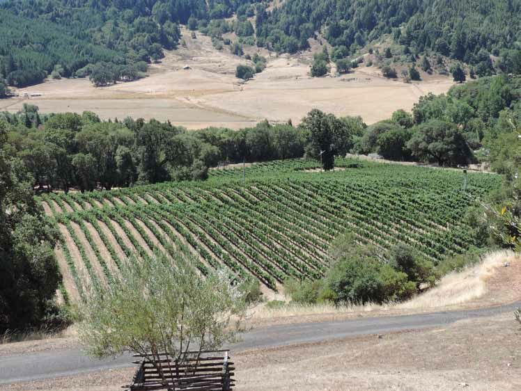 Weir-Vineyard.jpg