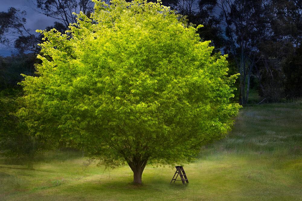 Night Garden V3.jpg