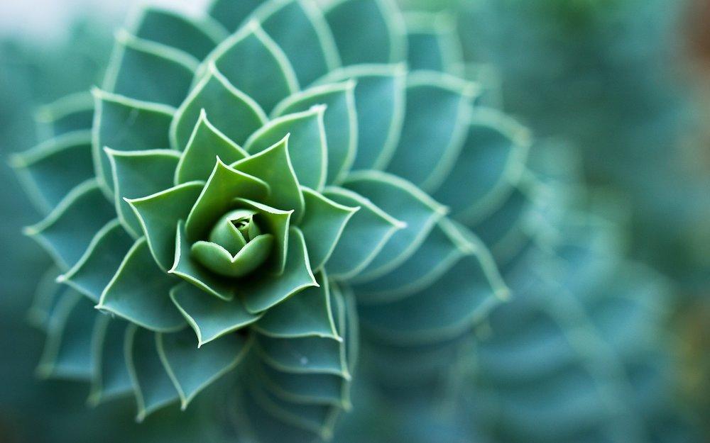 Исследование объектов растительного происхождения (ботаническая)