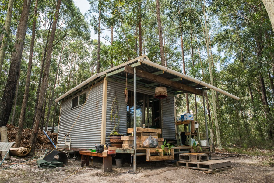 The shack sits amongst a crazy amount of wildlife and is dwarfed by the gums that surround it.