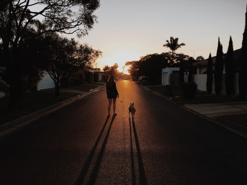 Kelly, Dog, Louis, RIP, Broadbeach, Bombala, Street, Gold Coast.
