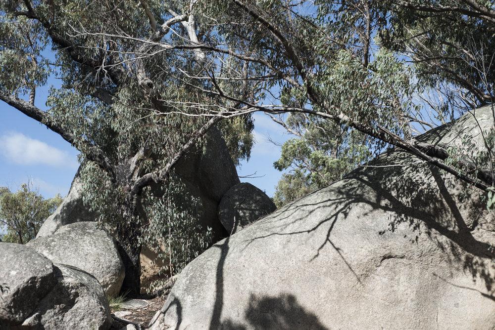 Very Australian Backdrop