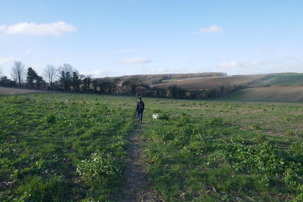 Best walks in Kent