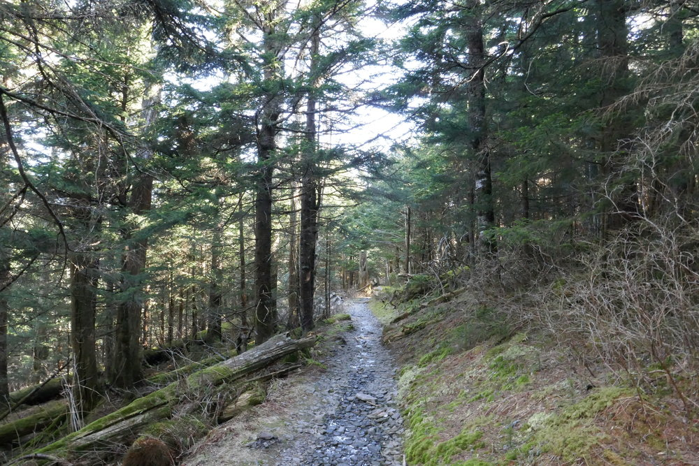 Appalachian Trail Blog 3 - Fontana Dam to Hot Springs -