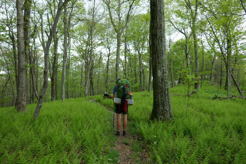 Appalachian Trail - Damascas to... out