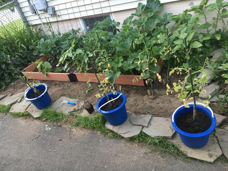 Michelle's Garden Grows.jpg
