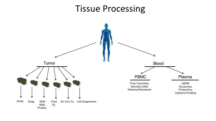 Tumor Banking processing.jpg