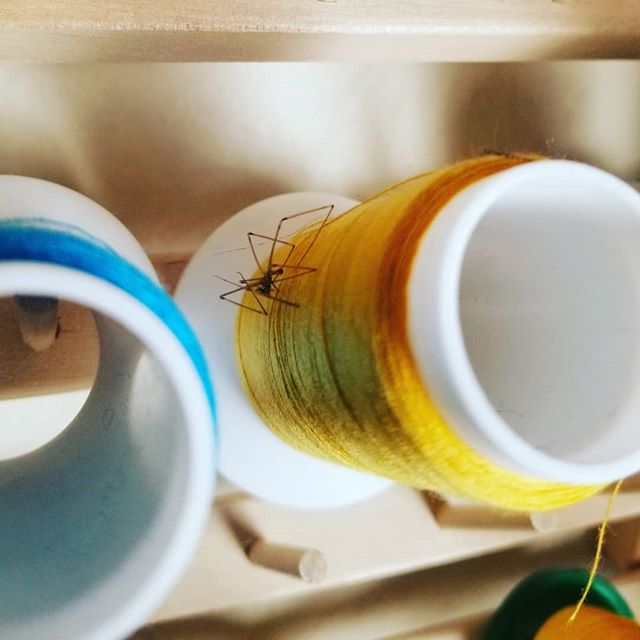 Hmm, don't have the right thread color to ruche this waistband. Oh wait! I have yellow serger thread! That will work.  Oh. I have an assistant who died trying to show it to me.  #sewing #spider