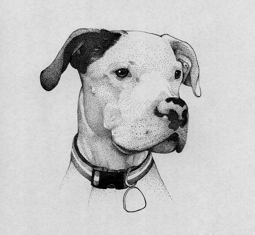 pitbull-dog-illustration.png